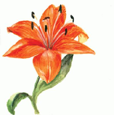 Go Back > Gallery For > Tiger Lily Clip Art